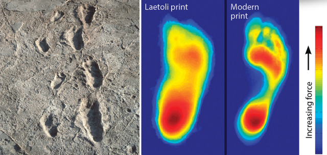 Volcano-Ol-Doinyo-Lengai-Mountain-God-eruption-lava-Laetoli-footprints.png